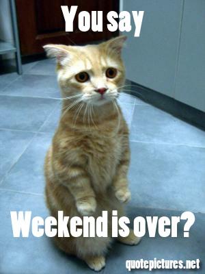 My Favorite Weekends  The Smirking Cat!