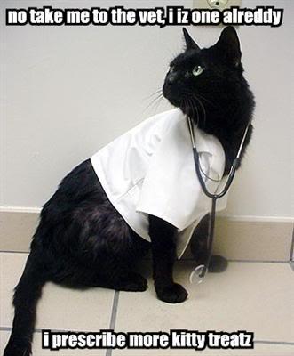 Cat Vet